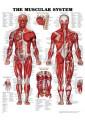 Medical and Anatomical Charts 34