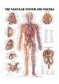Medical and Anatomical Charts 6